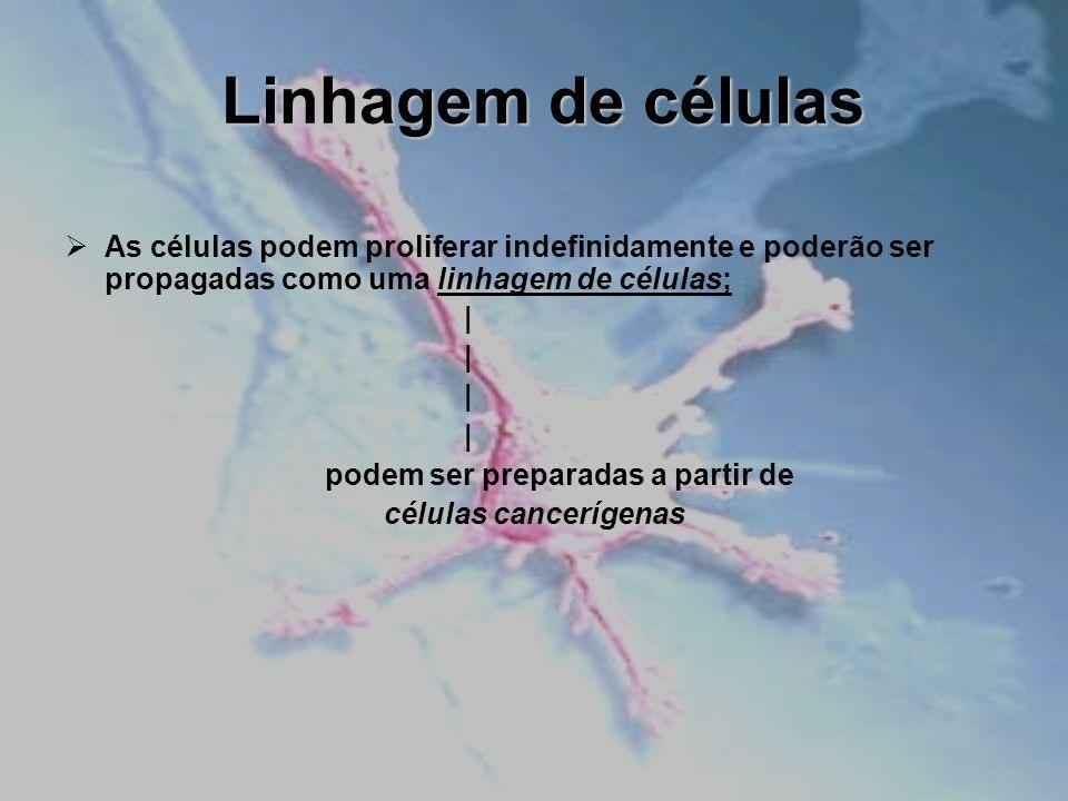 Linhagem de células As células podem proliferar indefinidamente e poderão ser propagadas como uma linhagem de células; | podem ser preparadas a partir