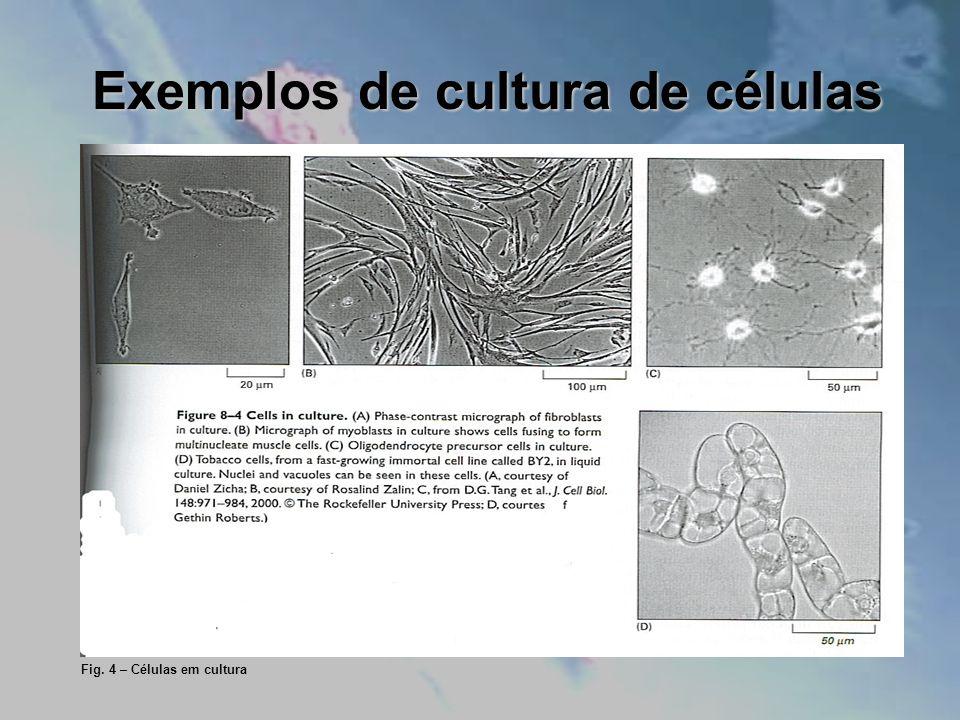 Exemplos de cultura de células Fig. 4 – Células em cultura