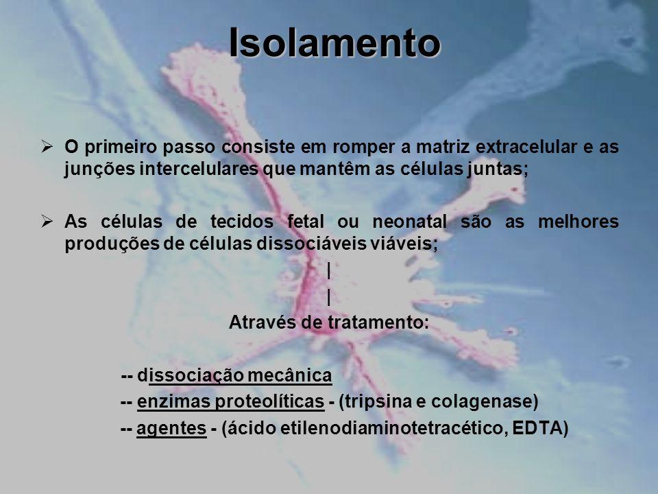 Isolamento O primeiro passo consiste em romper a matriz extracelular e as junções intercelulares que mantêm as células juntas; As células de tecidos f