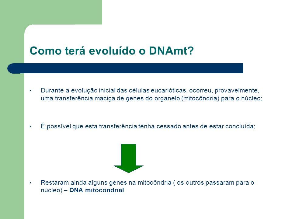 Como terá evoluído o DNAmt? Durante a evolução inicial das células eucarióticas, ocorreu, provavelmente, uma transferência maciça de genes do organelo