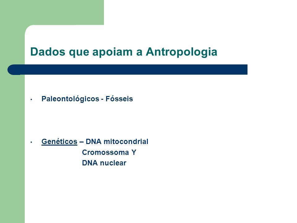 Dados que apoiam a Antropologia Paleontológicos - Fósseis Genéticos – DNA mitocondrial Genéticos Cromossoma Y DNA nuclear