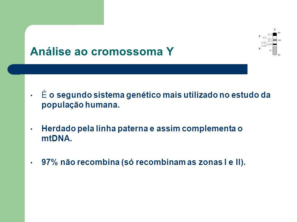 Análise ao cromossoma Y É o segundo sistema genético mais utilizado no estudo da população humana. Herdado pela linha paterna e assim complementa o mt