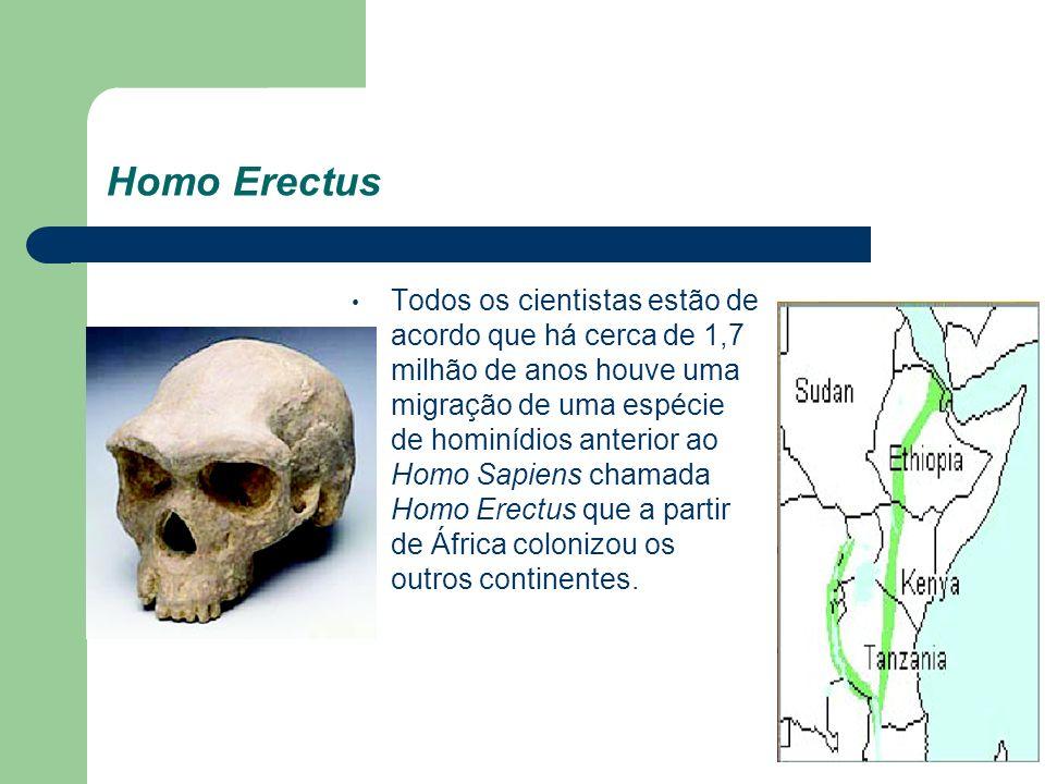Homo Erectus Todos os cientistas estão de acordo que há cerca de 1,7 milhão de anos houve uma migração de uma espécie de hominídios anterior ao Homo S