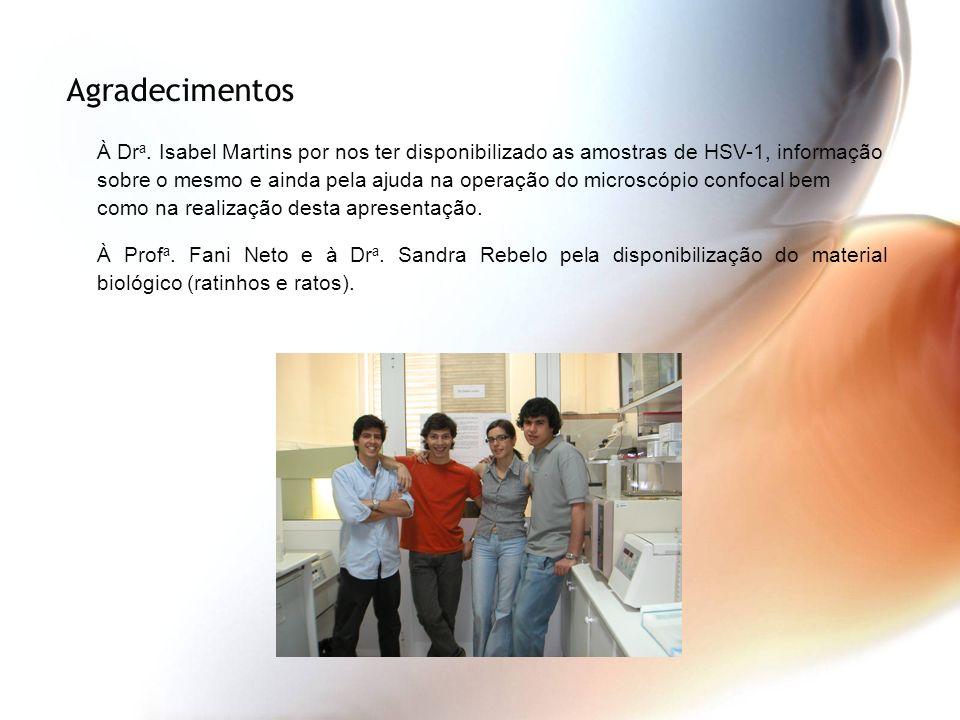 Agradecimentos À Dr a. Isabel Martins por nos ter disponibilizado as amostras de HSV-1, informação sobre o mesmo e ainda pela ajuda na operação do mic