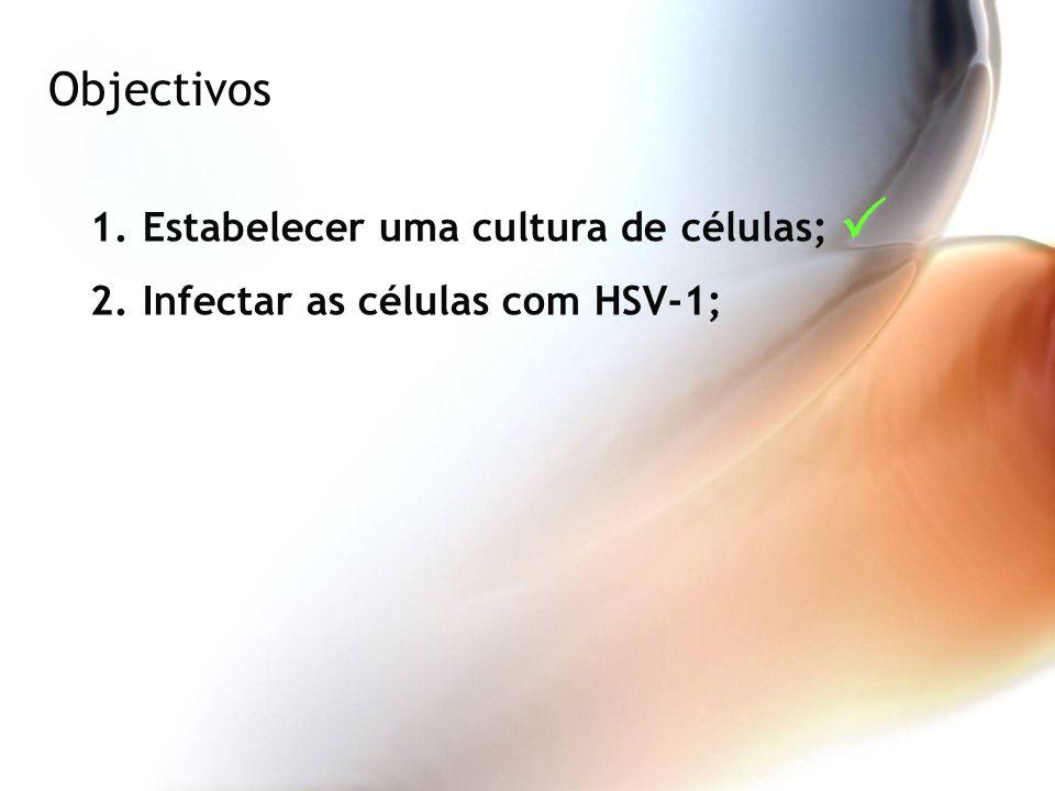 Objectivos 1.Estabelecer uma cultura de células; 2.Infectar as células com HSV-1;