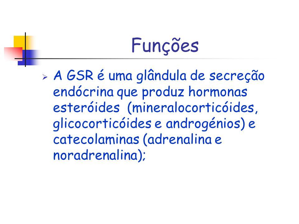 Funções A GSR é uma glândula de secreção endócrina que produz hormonas esteróides (mineralocorticóides, glicocorticóides e androgénios) e catecolamina