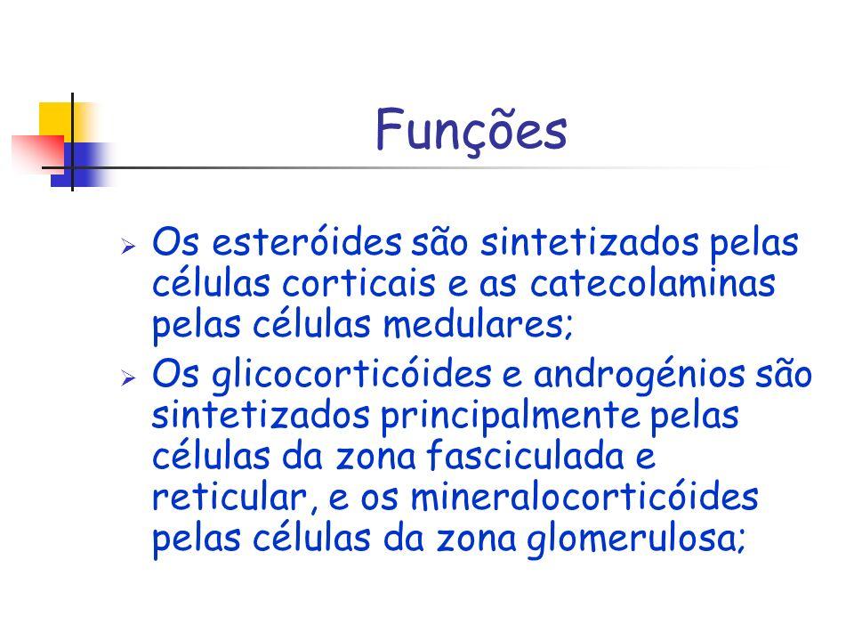 Funções Os esteróides são sintetizados pelas células corticais e as catecolaminas pelas células medulares; Os glicocorticóides e androgénios são sinte