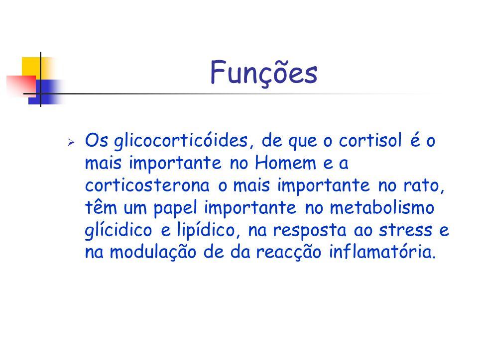 Funções Os glicocorticóides, de que o cortisol é o mais importante no Homem e a corticosterona o mais importante no rato, têm um papel importante no m