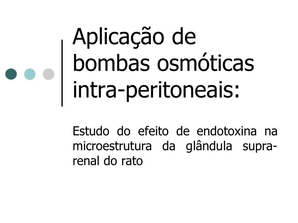 Aplicação de bombas osmóticas intra-peritoneais: Estudo do efeito de endotoxina na microestrutura da glândula supra- renal do rato
