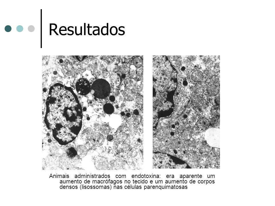 Resultados Animais administrados com endotoxina: era aparente um aumento de macrófagos no tecido e um aumento de corpos densos (lisossomas) nas célula