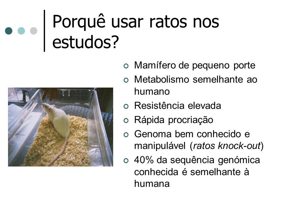 Porquê usar ratos nos estudos? Mamífero de pequeno porte Metabolismo semelhante ao humano Resistência elevada Rápida procriação Genoma bem conhecido e
