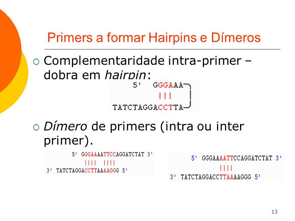 13 Primers a formar Hairpins e Dímeros Complementaridade intra-primer – dobra em hairpin: Dímero de primers (intra ou inter primer).