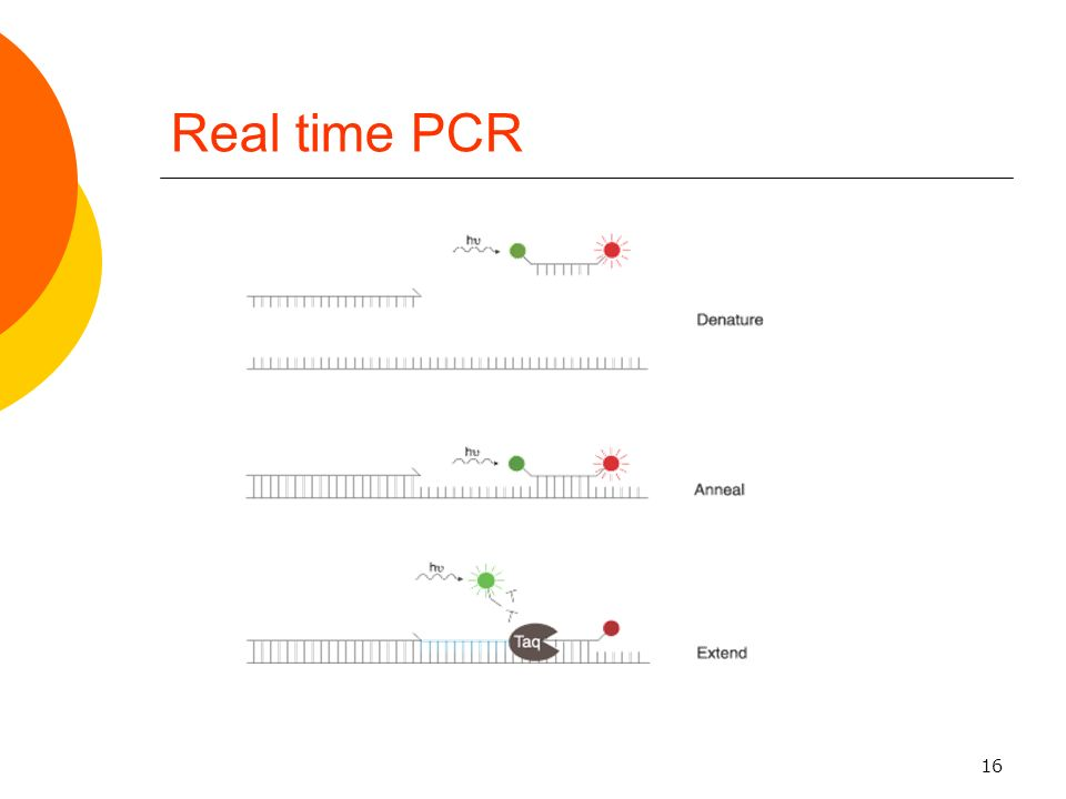 16 Real time PCR