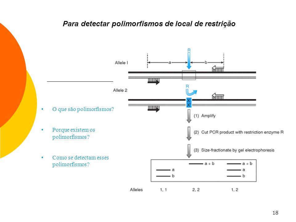 18 Para detectar polimorfismos de local de restrição O que são polimorfismos? Porque existem os polimorfismos? Como se detectam esses polimorfismos?