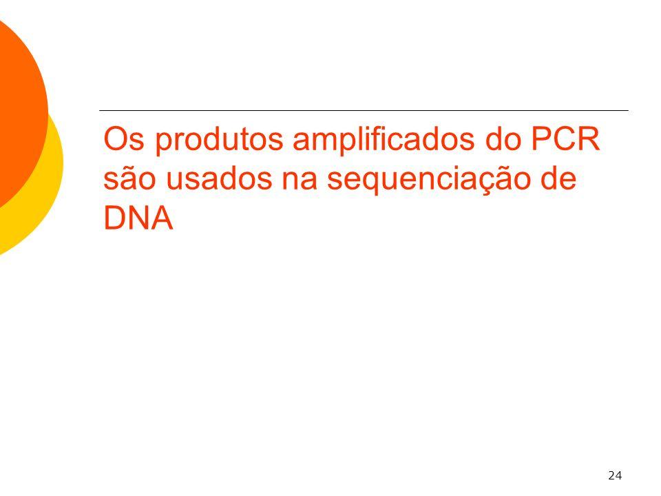 24 Os produtos amplificados do PCR são usados na sequenciação de DNA