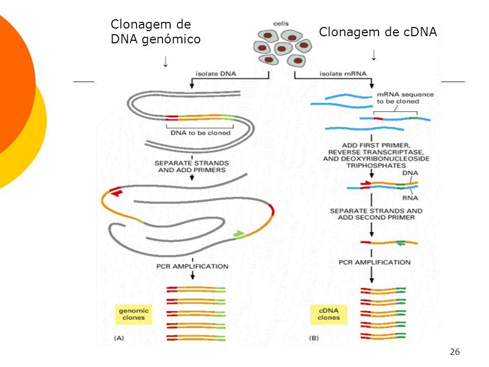 26 Clonagem de DNA genómico Clonagem de cDNA