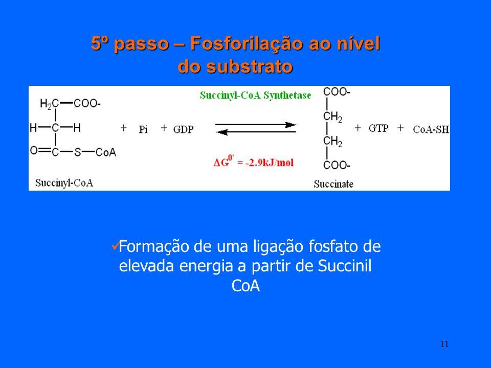 10 4º passo – Descarboxilação oxidativa do α-cetoglutarato α-cetoglutarato +NAD++CoA Succinil-CoA + NADH + CO2