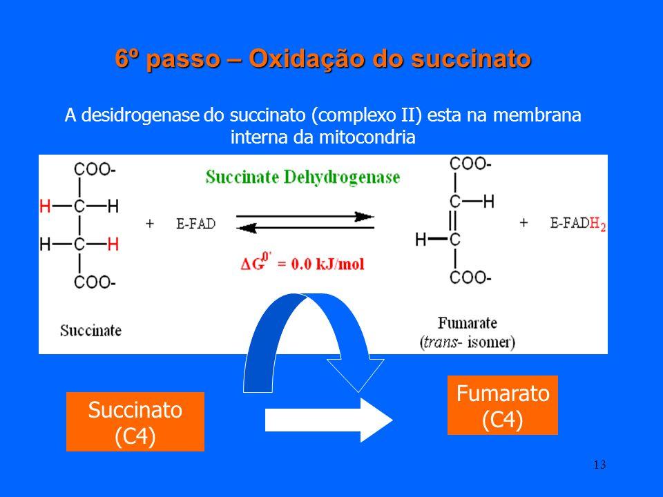 12 O GTP é utilizado na formação de um ATP pela nucleosídio difosfocínase ( permite a transferencia do fosfato terminal do GTP) Assim, esta reacção é
