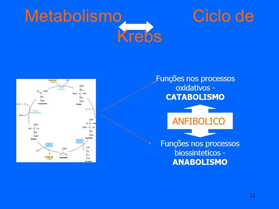 21 Vitaminas do Ciclo de Krebs A tiamina (vitamina B 1 ), na forma de tiamina pirofosfato, essencial para a descarboxilação oxidativa do α-cetoglutara