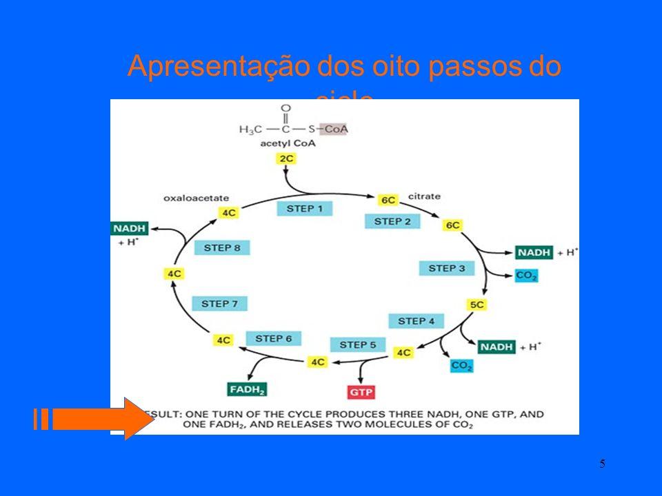 4 Quadro Síntese das reacções no ciclo de krebs
