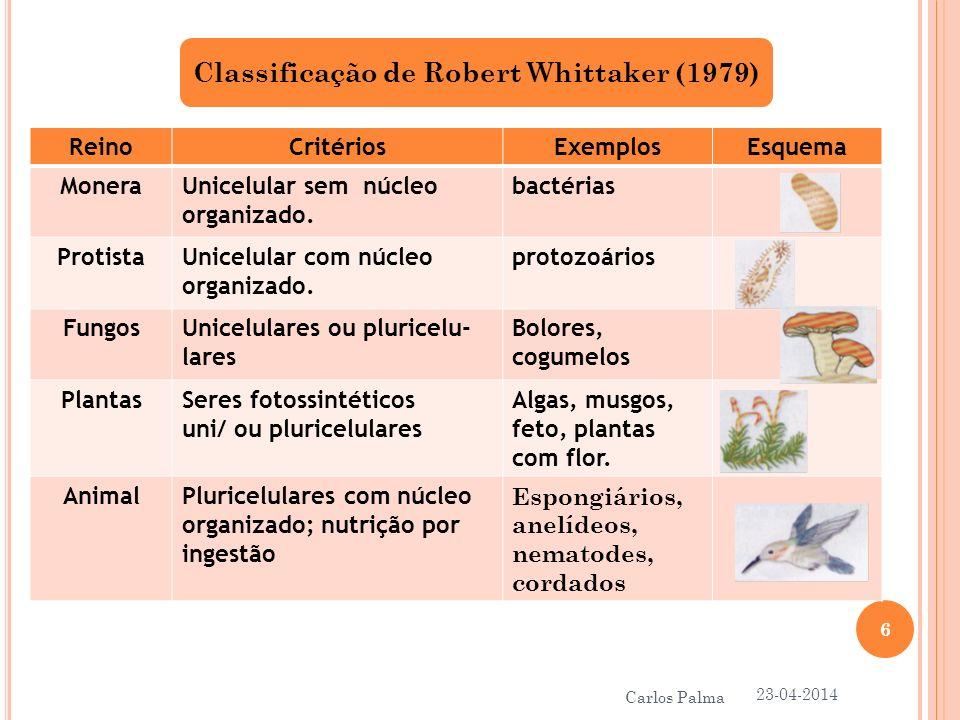 Chaves dicotómicas para identificação de classes 23-04-2014 7 Carlos Palma