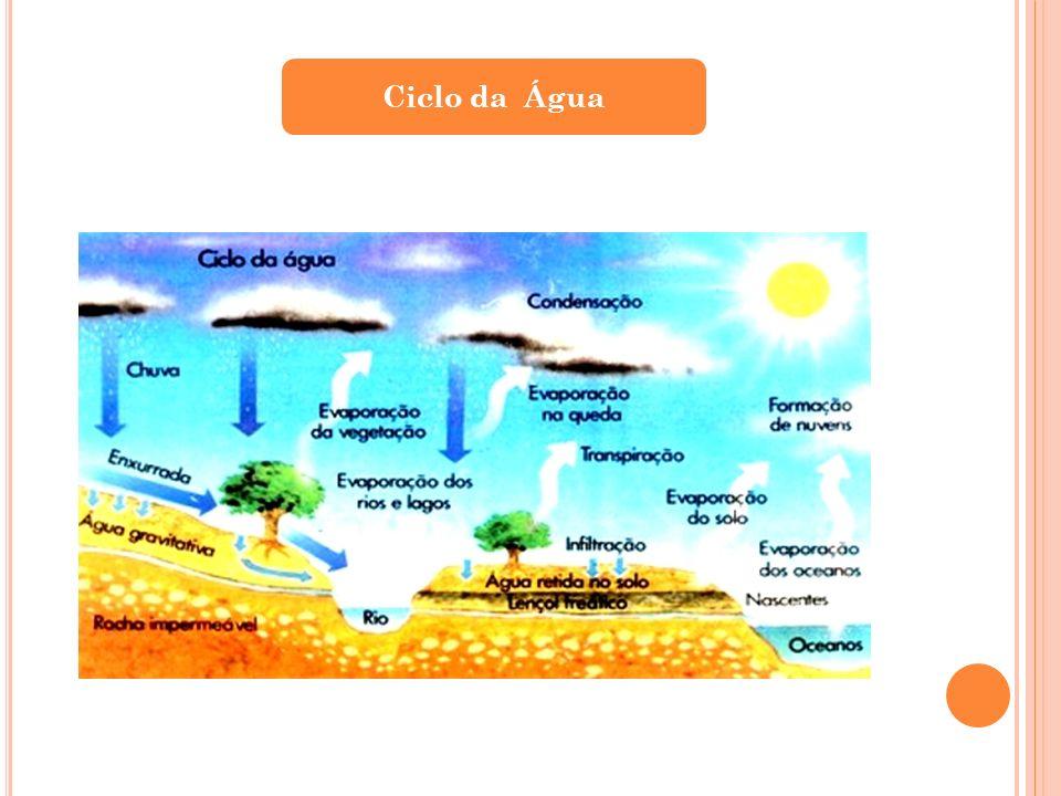 Causas da Contaminação A contaminação pode ser biológica, química e física