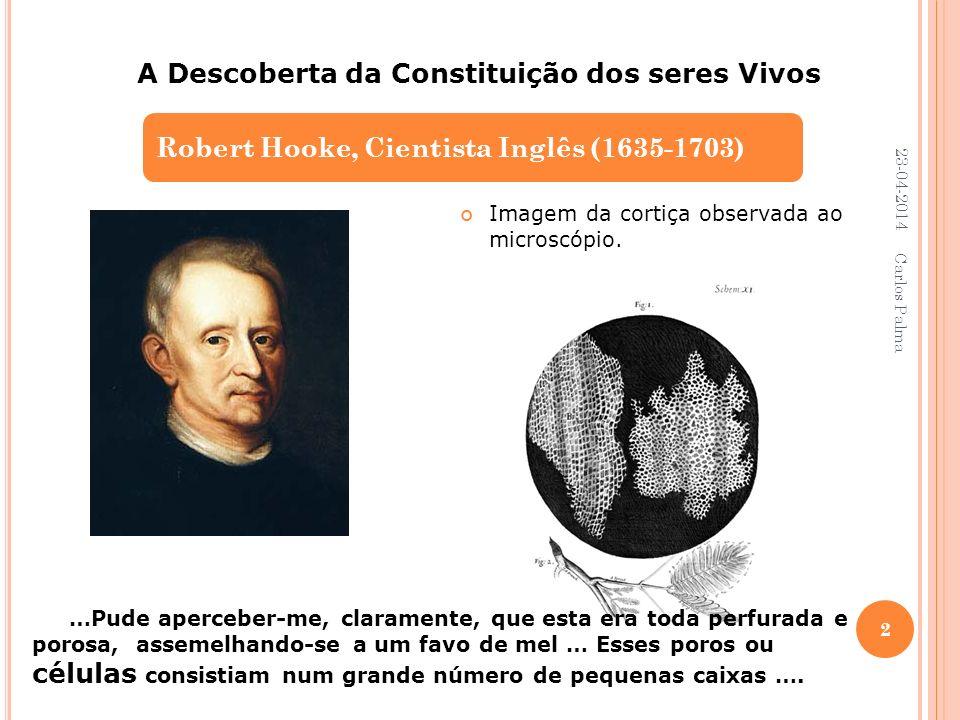 Imagem da cortiça observada ao microscópio. Robert Hooke, Cientista Inglês (1635-1703) A Descoberta da Constituição dos seres Vivos …Pude aperceber-me