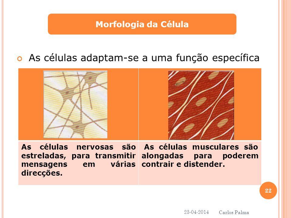 As células adaptam-se a uma função específica Morfologia da Célula As células nervosas são estreladas, para transmitir mensagens em várias direcções.
