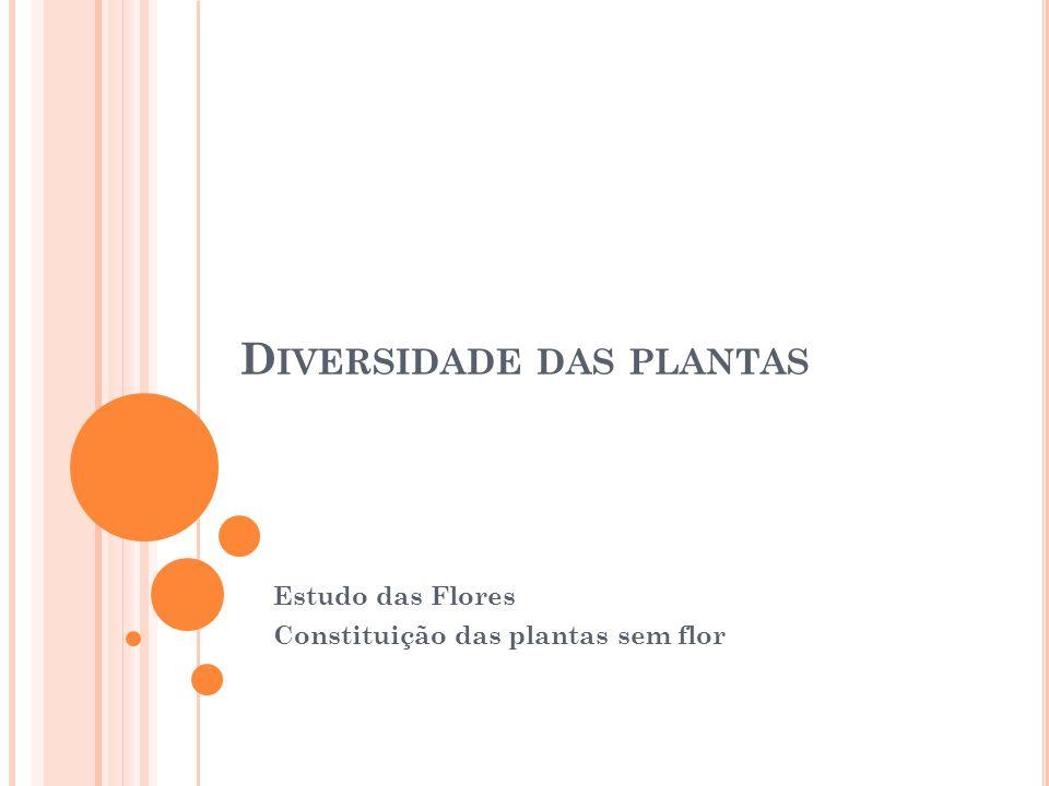 D IVERSIDADE DAS PLANTAS Estudo das Flores Constituição das plantas sem flor