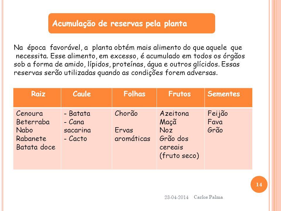 Acumulação de reservas pela planta 23-04-2014 Carlos Palma 14 Na época favorável, a planta obtém mais alimento do que aquele que necessita. Esse alime