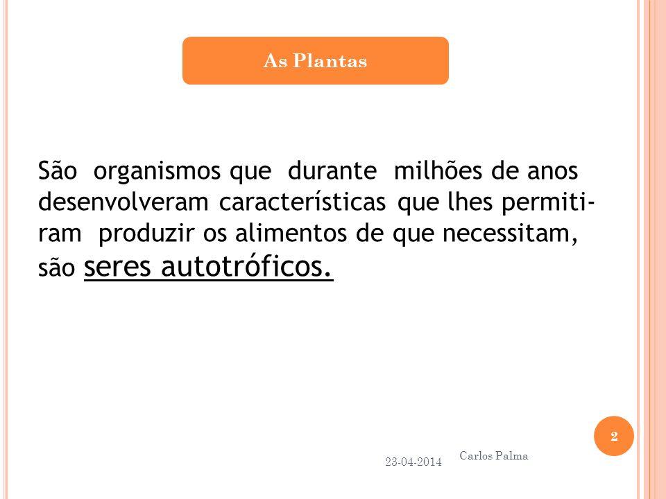 Respiração Celular nas Plantas 23-04-2014 Carlos Palma 13 As células das plantas também respiram, utilizam os glícidos produzidos na fotossíntese para produzir a energia que necessitam, na presença de oxigénio, libertando dióxido de carbono..
