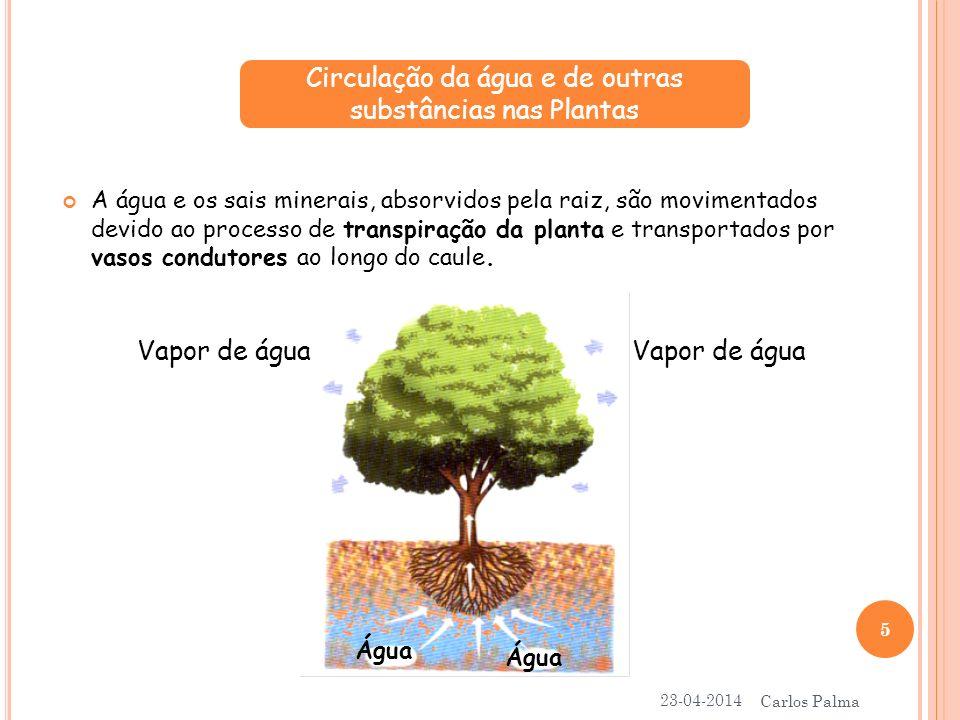 A água e os sais minerais, absorvidos pela raiz, são movimentados devido ao processo de transpiração da planta e transportados por vasos condutores ao