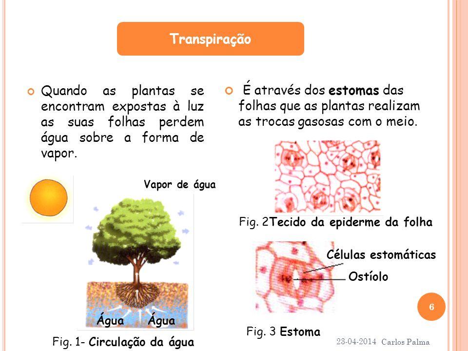Quando as plantas se encontram expostas à luz as suas folhas perdem água sobre a forma de vapor. É através dos estomas das folhas que as plantas reali
