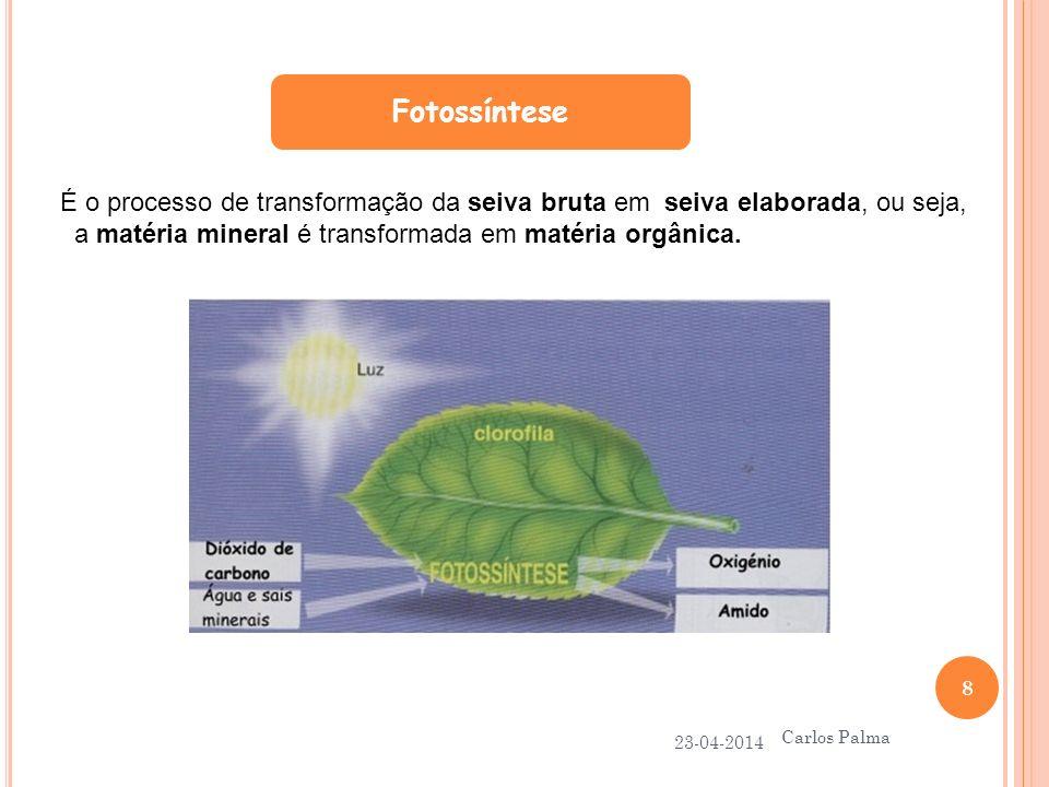 Fotossíntese 23-04-2014 Carlos Palma 8 É o processo de transformação da seiva bruta em seiva elaborada, ou seja, a matéria mineral é transformada em m