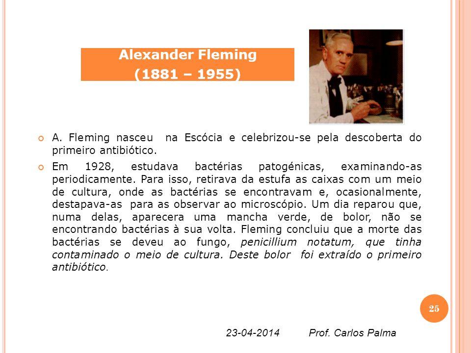 A. Fleming nasceu na Escócia e celebrizou-se pela descoberta do primeiro antibiótico. Em 1928, estudava bactérias patogénicas, examinando-as periodica