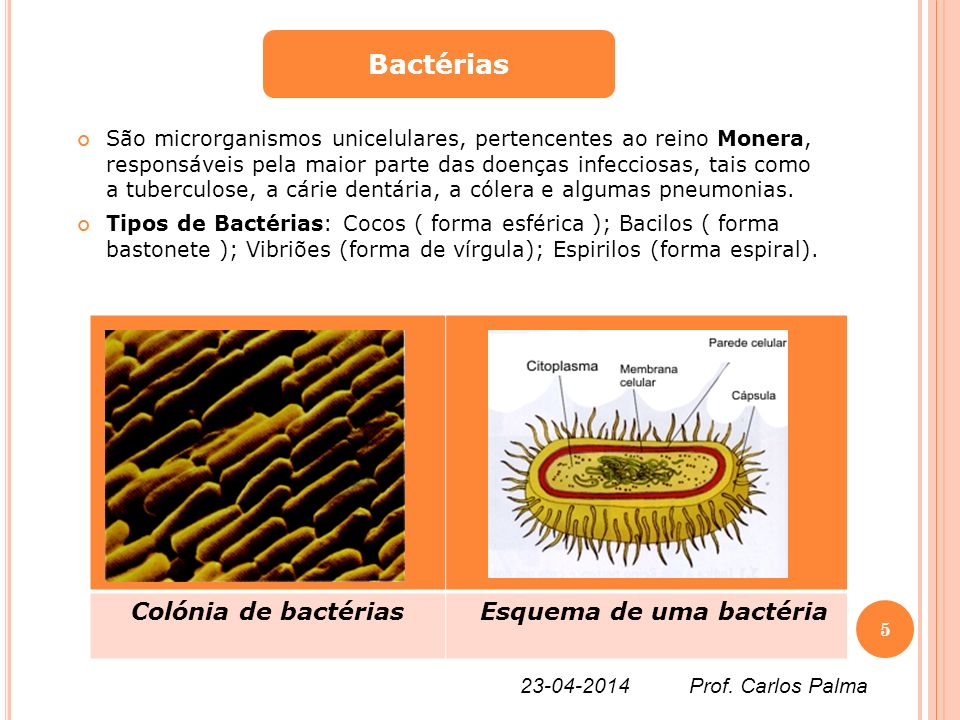 São microrganismos unicelulares, pertencentes ao reino Monera, responsáveis pela maior parte das doenças infecciosas, tais como a tuberculose, a cárie