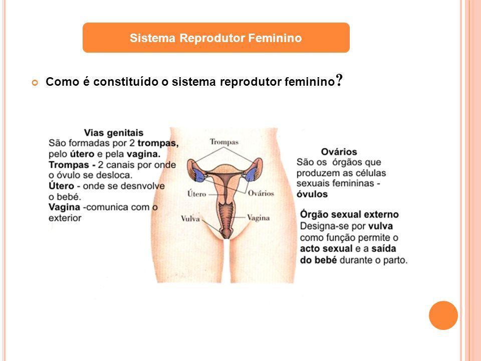 Como é constituído o sistema reprodutor feminino ? Sistema Reprodutor Feminino