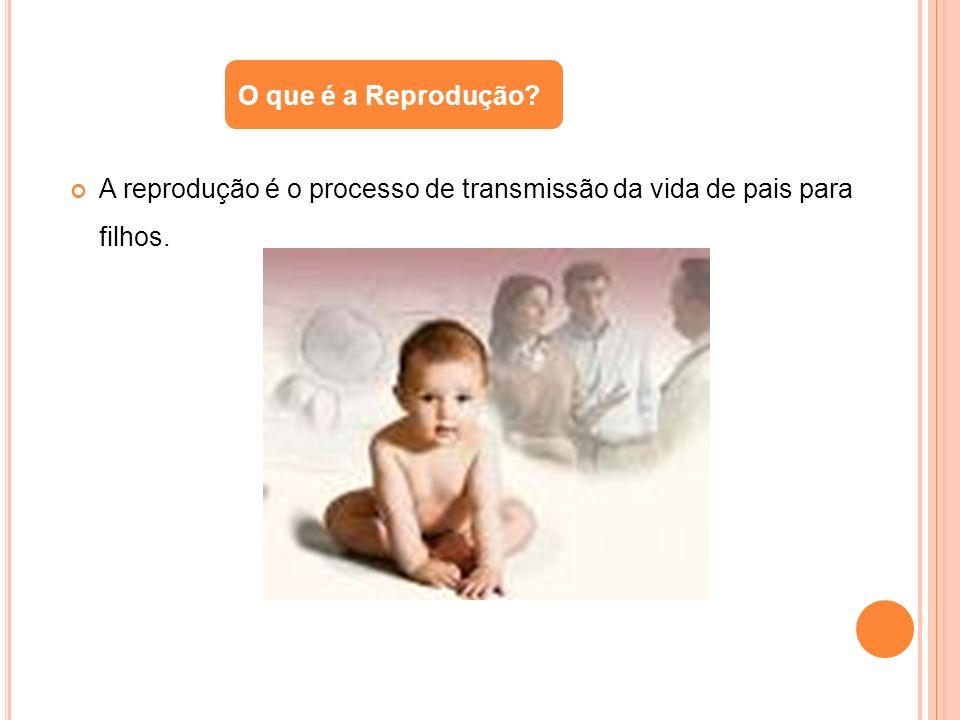 A reprodução é o processo de transmissão da vida de pais para filhos. O que é a Reprodução?