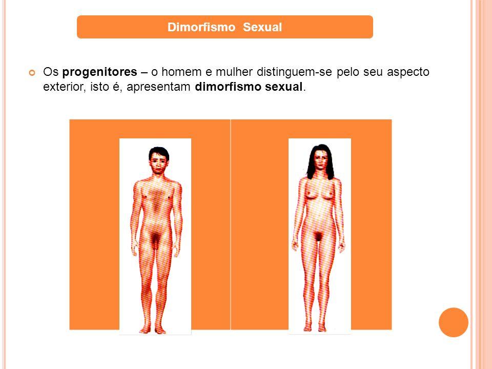 Os progenitores – o homem e mulher distinguem-se pelo seu aspecto exterior, isto é, apresentam dimorfismo sexual. Dimorfismo Sexual
