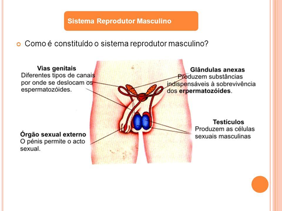 Como é constituído o sistema reprodutor masculino? Sistema Reprodutor Masculino
