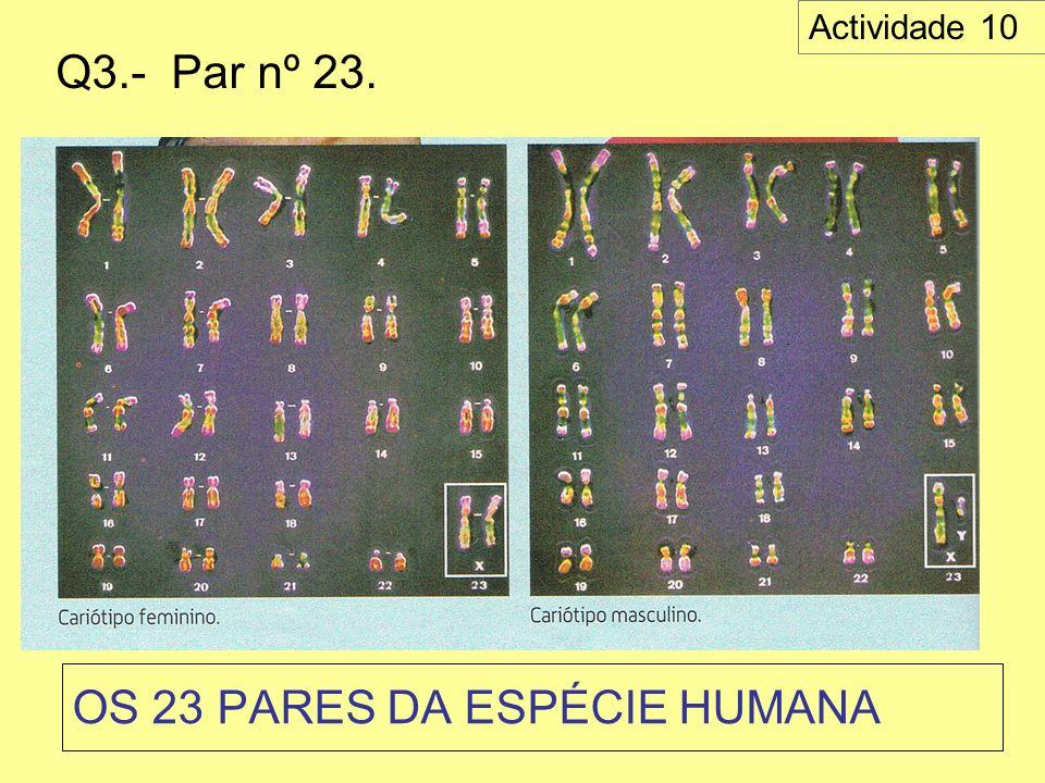 OS 23 PARES DA ESPÉCIE HUMANA Q3.- Par nº 23. Actividade 10