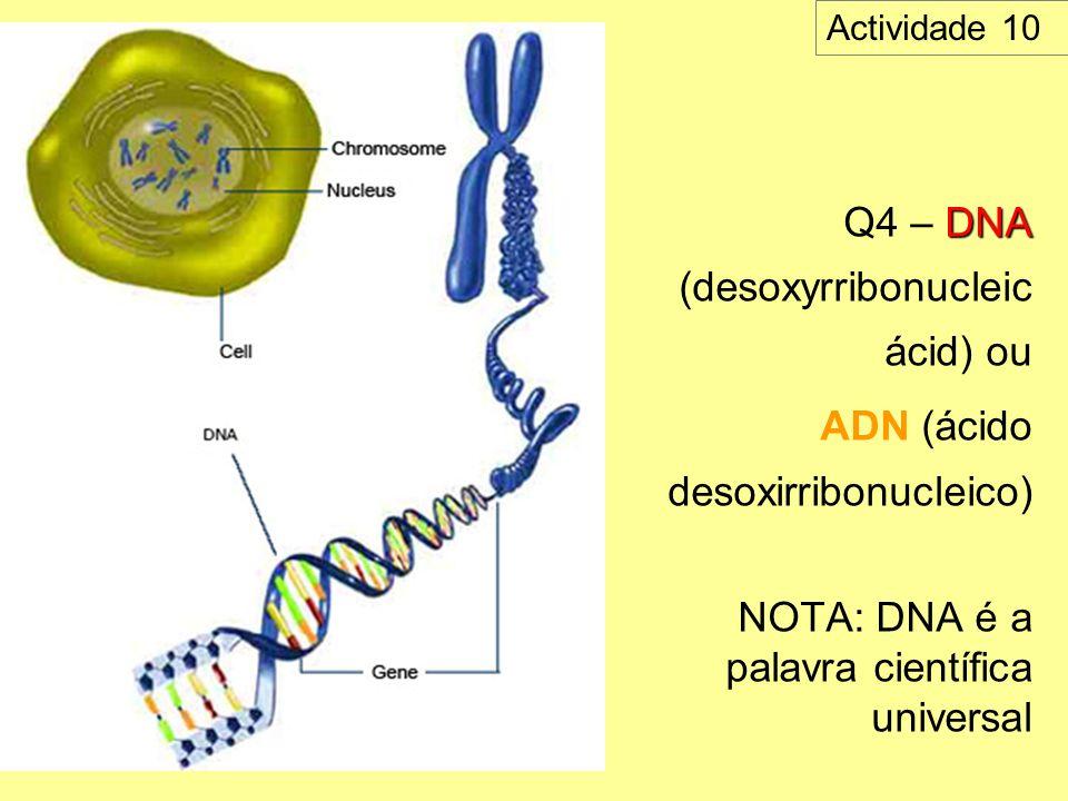 DNA Q4 – DNA (desoxyrribonucleic ácid) ou ADN (ácido desoxirribonucleico) NOTA: DNA é a palavra científica universal Actividade 10