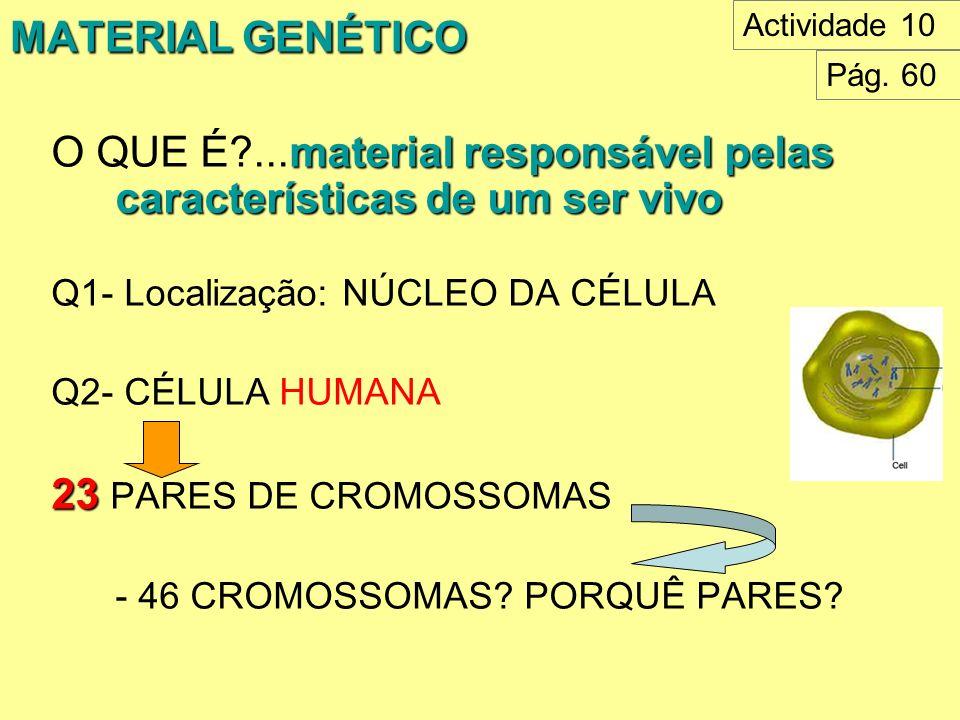 MATERIAL GENÉTICO material responsável pelas características de um ser vivo O QUE É?...material responsável pelas características de um ser vivo Q1- L