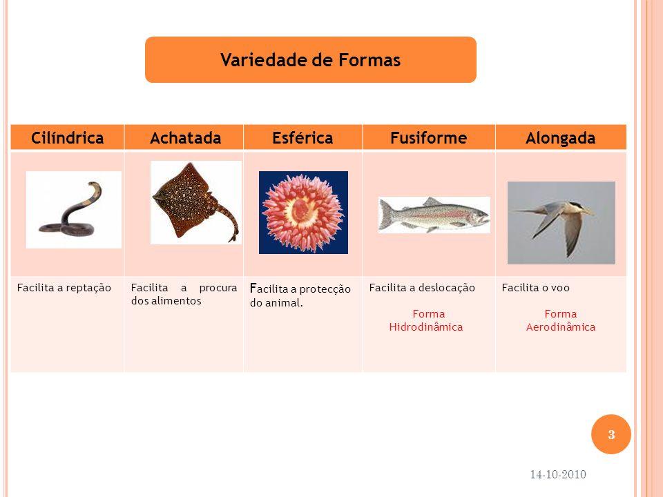 Variedade de Formas Cilíndrica AchatadaEsféricaFusiformeAlongada Facilita a reptaçãoFacilita a procura dos alimentos F acilita a protecção do animal.