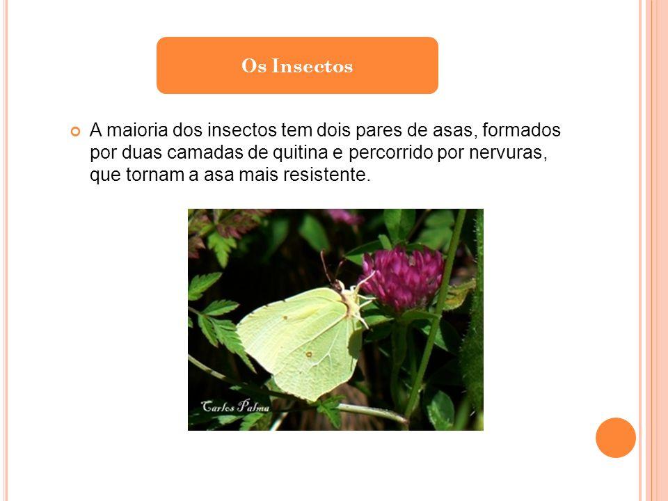 A maioria dos insectos tem dois pares de asas, formados por duas camadas de quitina e percorrido por nervuras, que tornam a asa mais resistente.