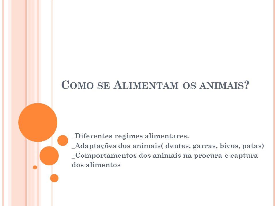 C OMO SE A LIMENTAM OS ANIMAIS ? _Diferentes regimes alimentares. _Adaptações dos animais( dentes, garras, bicos, patas) _Comportamentos dos animais n