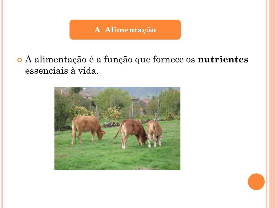 A Alimentação A alimentação é a função que fornece os nutrientes essenciais à vida.