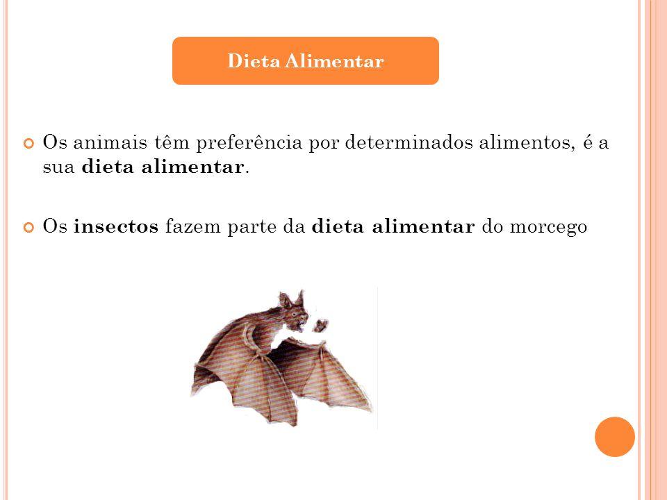 Os animais têm preferência por determinados alimentos, é a sua dieta alimentar. Os insectos fazem parte da dieta alimentar do morcego Dieta Alimentar