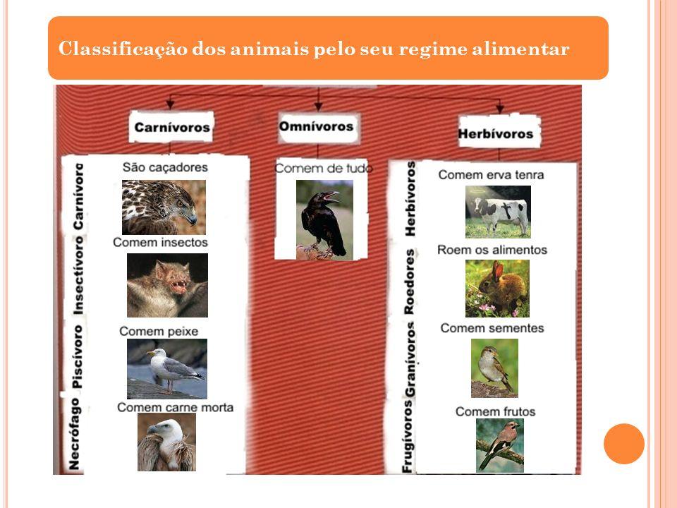 Classificação dos animais pelo seu regime alimentar
