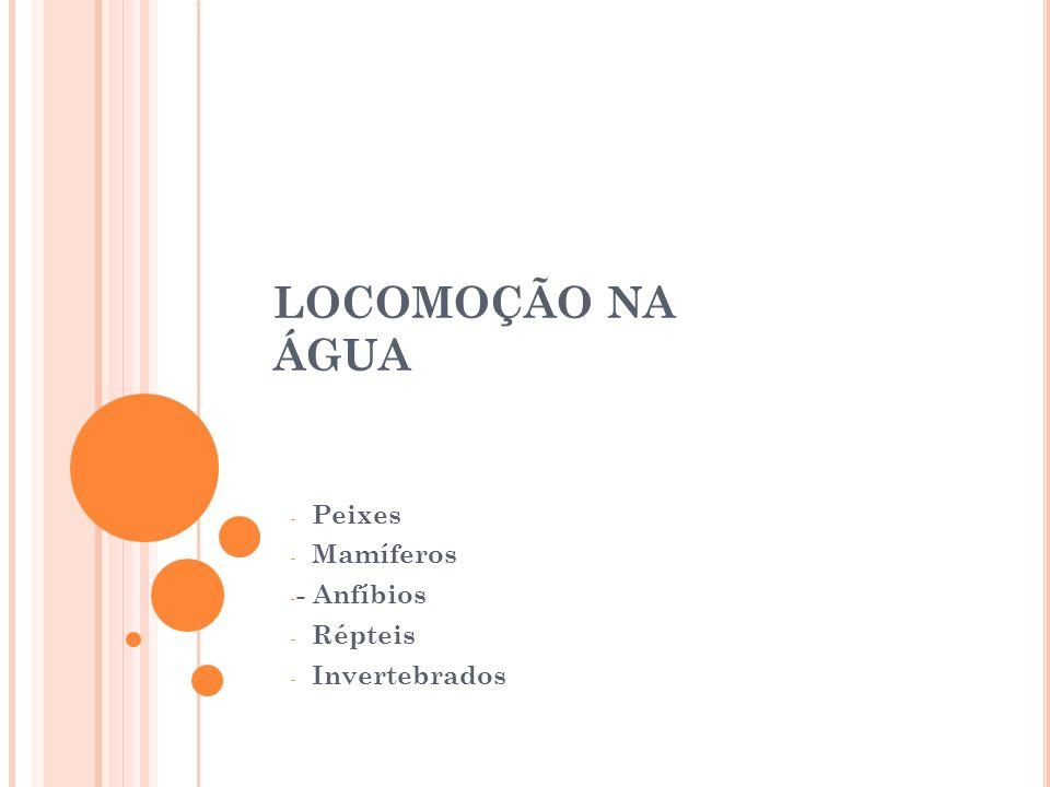 Barbatana caudal –serve de leme e remo Barbatanas anal e dorsal –servem para a estabilidade Barbatanas peitorais e ventrais – correspondem aos membros anteriores e posteriores e servem para o equilíbrio Locomoção dos peixes